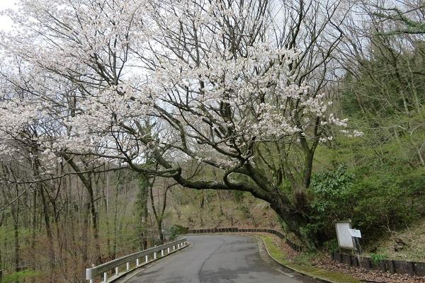 IMG_1938 ohnoyama 17.jpg