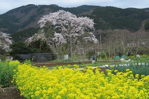 IMG_1950 ohnoyama 18.jpg